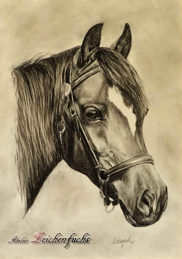 Kohleportrait eines Pferdes