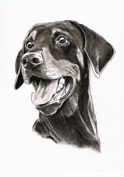 "Hundezeichnung Dobermann ""Floyd"""